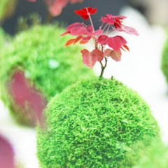 苔玉 Kokedama Workshop