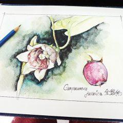 藥草寫生 Plant Sketching